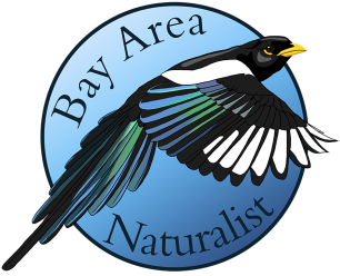 Cropped_Bay_Area_Naturalist_1080p_Color