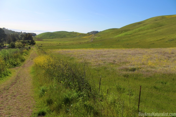 Ed R. Levin County Park