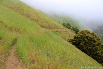 Russian Ridge Open Space Preserve